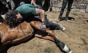 Изнасилование крупного рогатого скота
